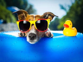 SPECIAL RATE TRAVEL WITH PETS (DOGS)!