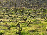 TOUR VINEYARD BUIL GINE - TASTING 3 DO PRIORAT WINE VARIETIES - APARTHOTEL ATENEA AVENTURA 4*